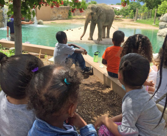 The Gardens: Girl Scout Troop Visits Zoo